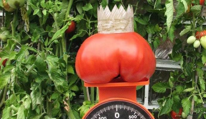 Pz Kürt Größte Tomate Im Enzkreis Nachrichten Aus Dem Enzkreis Und