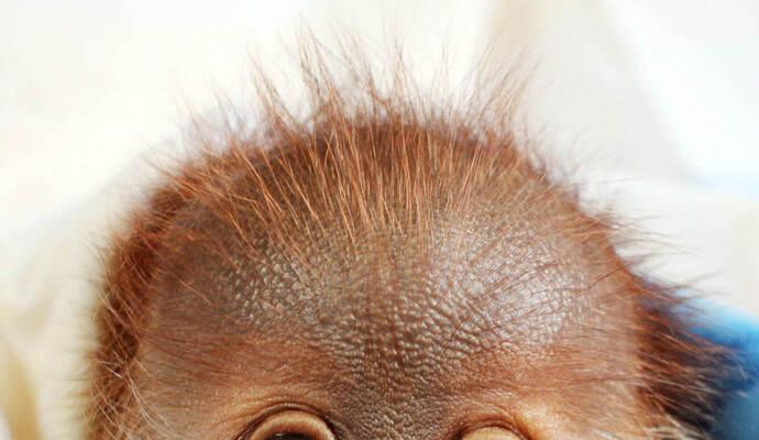 Affenbaby Rieke reist in seine neue Heimat - Foto