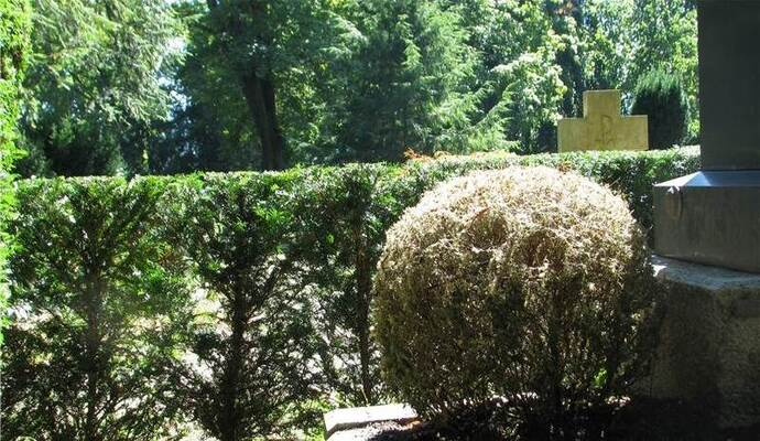 sch dlinge befallen hauptfriedhof wei e buchsbaumhecken nachrichten aus pforzheim bei pz. Black Bedroom Furniture Sets. Home Design Ideas