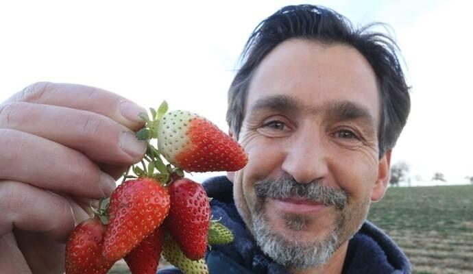 Gemeinsame Spätherbst-Ernte: In der Region gibt es vereinzelt Erdbeeren @ZJ_39