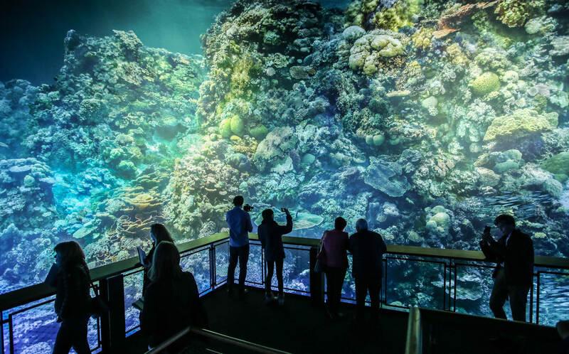 Pforzheim Great Barrier Reef