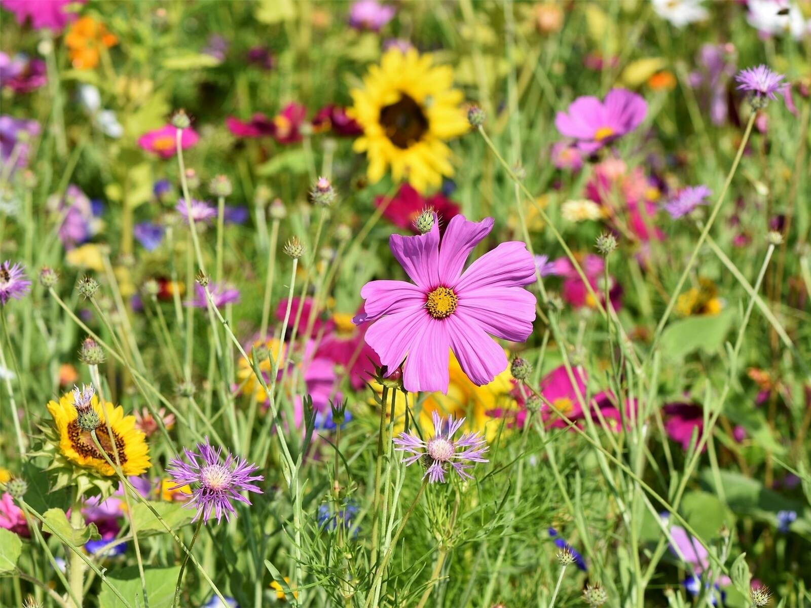 760_0900_99534_flower_meadow_3598561_1920.jpg