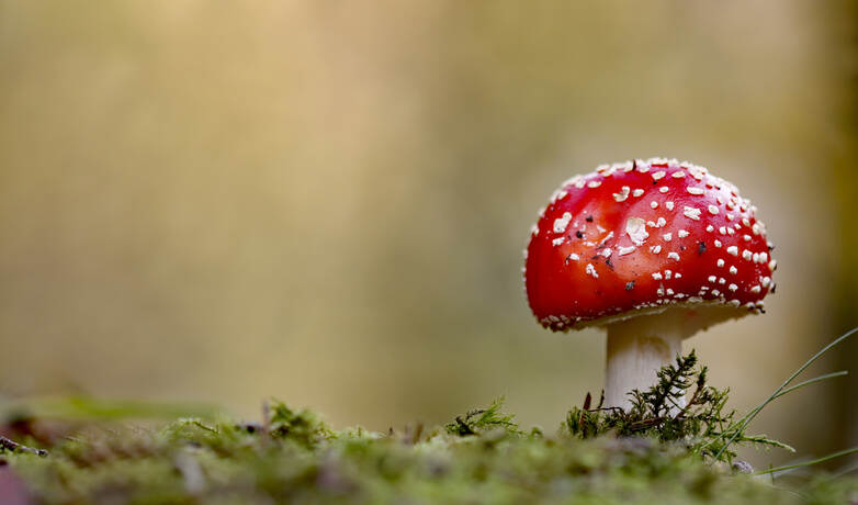 _MG_6815 Herbst (2)